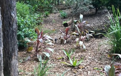 Cordylines and my visit to the tip